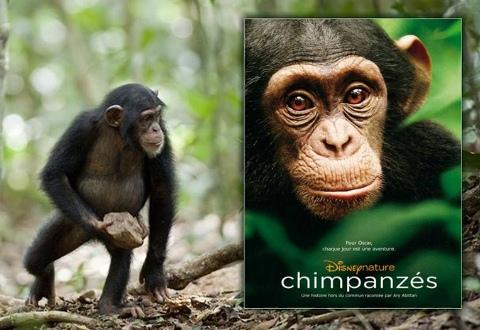 biodiversité,nature,forêt,chimpanzés,film,disney