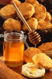 abeille miel.jpg