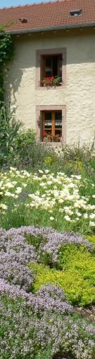 environnement,biodiversité,nature,abeille,pollinisation,agriculture,collectivités locales