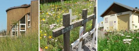 environnement,biodiversité,nature,abeille,jardin,produits chimiques