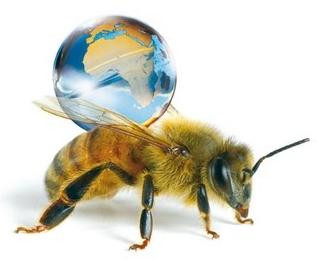 disparition abeille.jpg