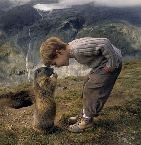 biodiversité, nature, marmotte, éducation environnementale, éthologie