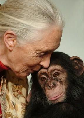 biodiversité, chimpanzés, singe, nature, Jane Goodall, film