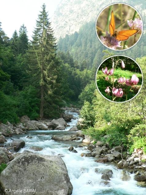 environnement,biodiversité,nature,botanique,flore