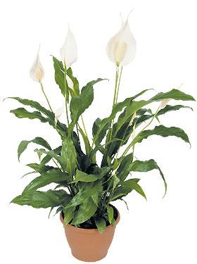 Le concept d bile du mois purifier votre air avec andrea - Plantes interieur depolluante ...