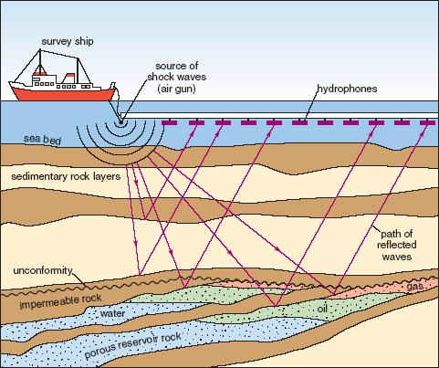 Bruit, biodiversité, prospection offshore, énergie, environnement