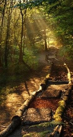 environnement,nature,bien-être,santé,loisir