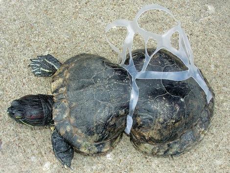 océan, pollution, déchet, plage, plastique, ONG Surfrider
